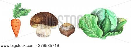Watercolor Images Of Juicy Carrot, Steady White Mushroom, Smooth Hazelnut And White Cabbage Isolated