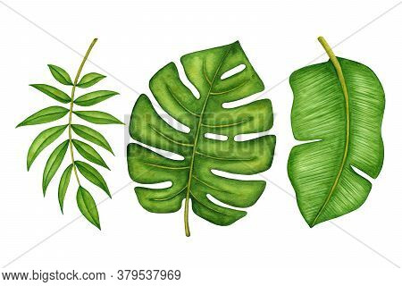 Watercolor Green Tropical Tree Leaves Set Isolated On White Background. Hand Drawn Rainforest Palm B