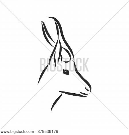 Antelope Sketch Vector Graphics Black And White Drawing