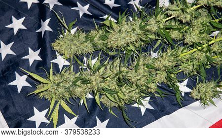 Trimming A Fresh Harvest Of Marijuana In Details. Cannabis News In 2020
