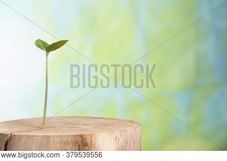 Young Plant Grows From The Inside Old Tree On A Green Background, Concept Of Sprout New Life Grows
