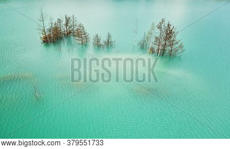 Green Lake Water With Growing Tree