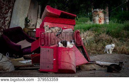Street Cats Sit On Old Broken Furniture. Animals