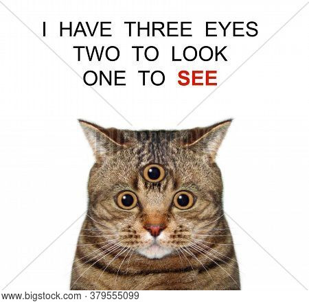 The Beige Cat Has Got Third Eye. I Have Three Eyes Two Look One See. White Background. Isolated.