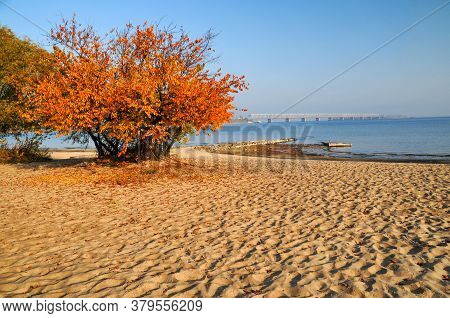 Yellowed Apricot Tree And Textured Sand On The Beach On Shore Of Dnieper River In Cherkasy, Ukraine