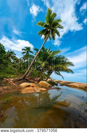 Palm Trees On A Wild And Inaccessible Beach In Thailand. Palm Trees Bent Over The Water. Palm Trees