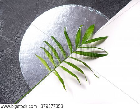 Green plant leaf on dark concrete background. Flat lay, top view, minimal design template with copyspace.