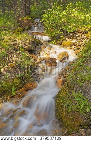 Rushing Stream In A Verdant Forest In Banff National Park In Alberta, Canada