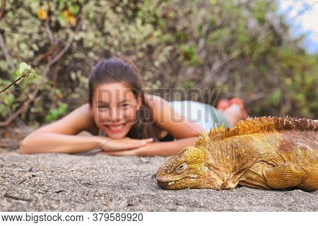 Galapagos islands travel experience. Woman Tourist excursion visiting looking at animal in the wild. Largest land iguana, yellow iguanas in Urbina Bay, Isabela island, Galapagos Islands, Ecuador.