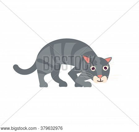 Playful Gray Cat Cautiously Sneaks Steals. Square Card With Funny Kitten In Flat Design. Happy Cats