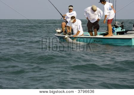 Tarpon Is Caught And The Gaff Is In