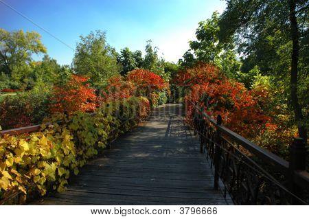 Herbst pathway