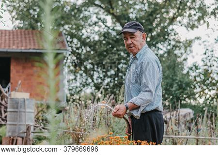 Grandfather Holding Hose In His Hand And Sprinkling Tomatoes