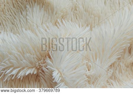 Delicate Soft Background Of Plush Fabric Folds On White Background. Copy Space. Flat Lay. Loose Fold