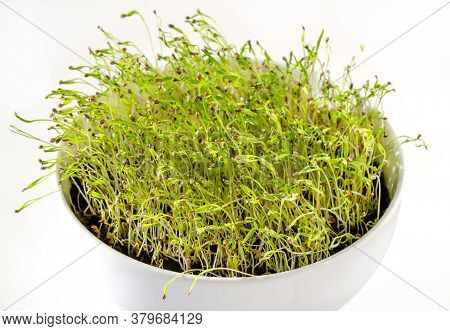 Carrot Seedlings In A White Bowl, Front View. Shoots Of Daucus Carota, A Root Vegetable, In Potting