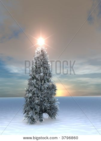 Christmas Tree Sunrise