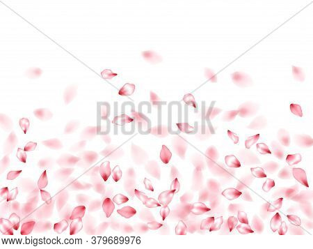 Pink Peach Flower Flying Petals Isolated On White. Realistic Floral Background. Japanese Sakura Peta