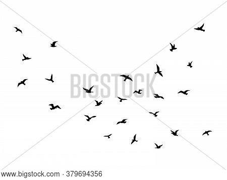 Flying Bird. Flock Of Birds Black Silhouettes, Abstract Flight Migration Animal Wildlife, Creative D