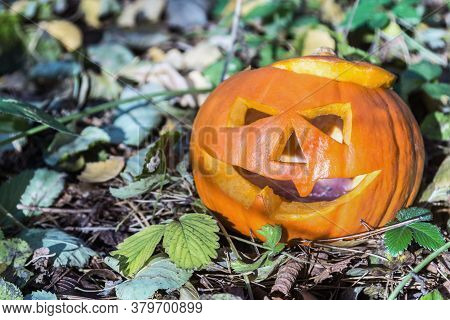 Jacks Lantern Carved From A Pumpkin On Autumn Leaves In The Forest