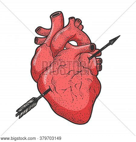 Heart Realistic Pierced With Arrow Color Sketch Engraving Vector Illustration. Romantic Love Lovesic