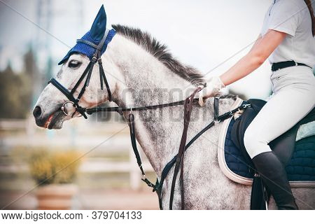 Portrait Of A Gray Horse With A Bridle On Its Muzzle, On Which A Rider In A White Suit Sits In The S