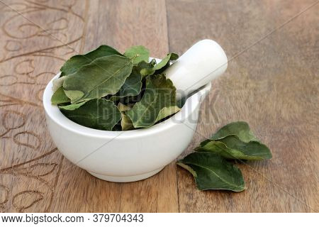 Kaffir lime leaf herb in a mortar with pestle used in herbal medicine used for oral health, boost skin health, detoxify the blood, indigestion, flatulence, dandruff & nausea, on wood. Citrus hystrix.