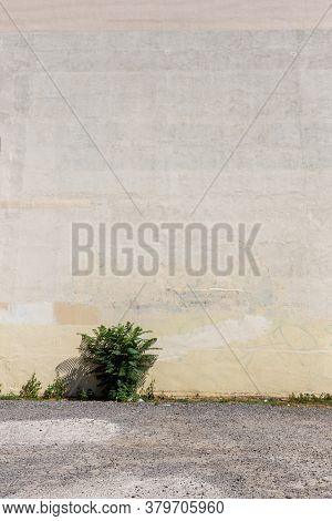 Distressed Light Yellow Brown Old Graffiti Brick Wall Street Art. Background And Painted Lines And D