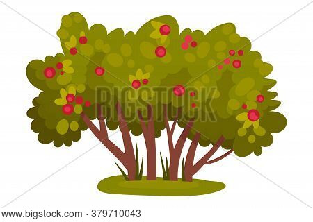 Bush With Berries And Lush Foliage As Forest Element Vector Illustration