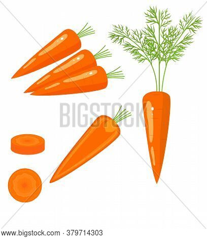 Bright Vector Set Of Colorful Half, Slice And Whole Of Carrot. Fresh Cartoon Vegetable Isolated On W