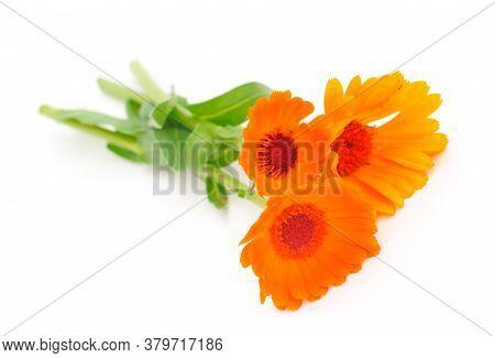 Isolated Flowers Of Calendula Officinalis Marigold. Orange, Fresh.