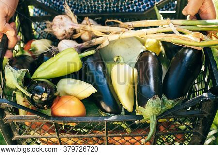 Man Holding Crate With Fresh Vegetables. Summer Or Autumn Harvest.
