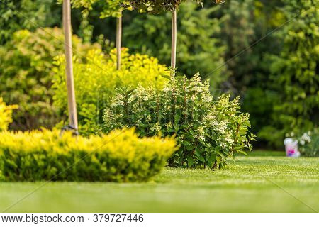 Beautiful Lush Landscaping Design Of Backyard Garden With Well Maintaine Trees Grass Bushes And Hedg