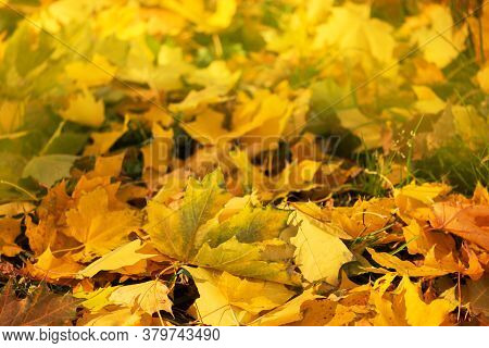 Autumn Leaf Texture. Colored Falling Leafs Background