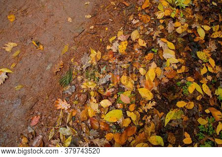 Autumn Natural Background Texture With Colorful Leaves