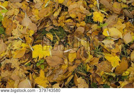Floral Autumn Background. Fall Leave On Ground In Forest