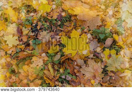 Fallen Autumn Leaves On Grass. Autumn Leaves Background