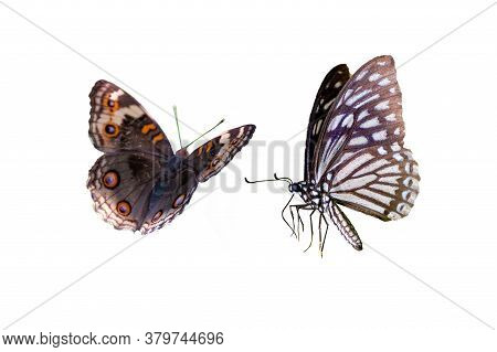 Butterfly Spots Orange Yellow White Background Isolate