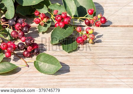 On A Wooden Surface, There Are Branches With The Fruits Of The Berry Shrub Irga.