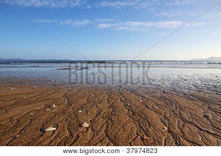 Taipa Beach Close Up