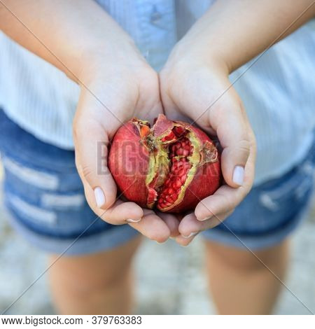 In Female Hands Ripe Juicy Pomegranate Fruit. Copy Space. View From Above.