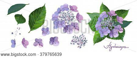 Set Of Purple Hydrangea Flowers With Bud, Stems And Leaves On White Background. Isolated Floral Set