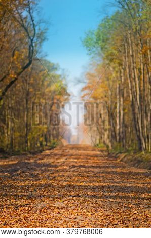Colorful Autumn Road In The Forest. Road Through Park In Fall