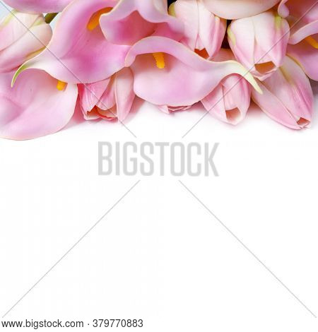 Pink calla lilies and pink tulips. Japanese home garden