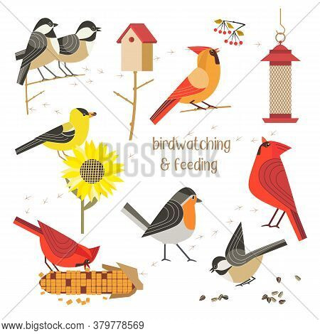 Birdwatching, Bird Feeding Icon Set. Red Northern Cardinal, Robin, Chikadee, Goldfinch Comic Flat Ca