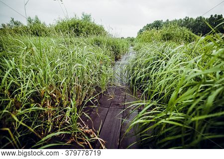 A Wooden Path Runs Through The Grass, A Wet Wooden Path, A Path In The Garden Made Of Planks