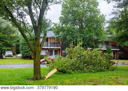 The Fallen Trees In A Storm Damage After Powerful Hurricane