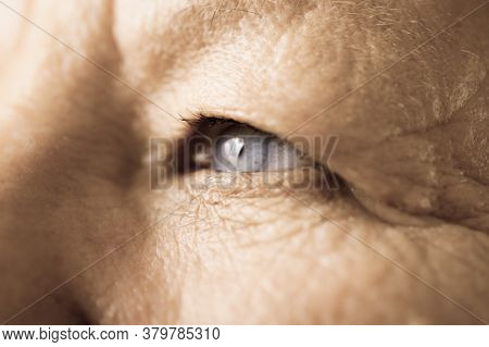 Details Of Senior Woman Face. Elderly Pensioner Female Eye Detailed Close Up.