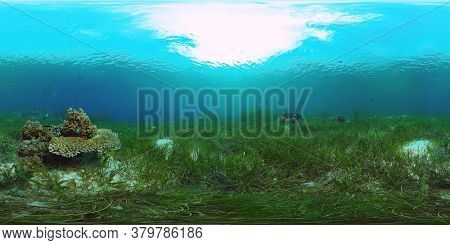 Underwater Fish Reef Marine 360vr. Tropical Colorful Underwater Seascape With Coral Reef. Panglao, P