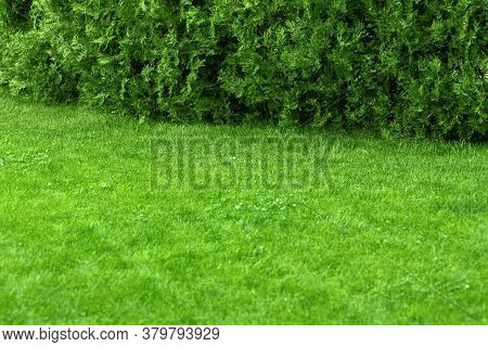 Glade With Green Lawn With Copy Space Of Park Landscape Design, Backyard With Grass And Thuja Cypres