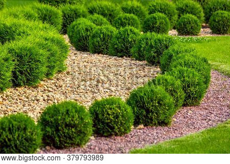 Landscaping Of A Backyard Garden With Wave Ornamental Growth Cypress Bushes By Yellow Stone Mulch Wa